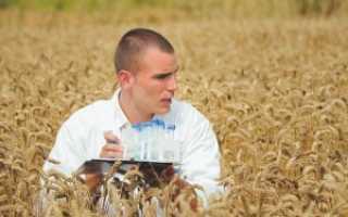 Кто такой главный агроном и каковы его должностные обязанности