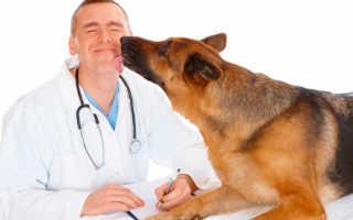 Средняя заработная плата ветеринара в России