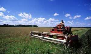 Как получить грант начинающему фермеру: условия получения